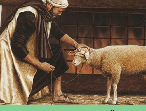 Sacerdote animal sacrifício